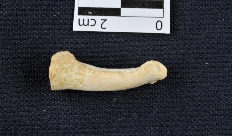 Descubren una nueva especie humana en Filipinas: «Homo luzonensis»