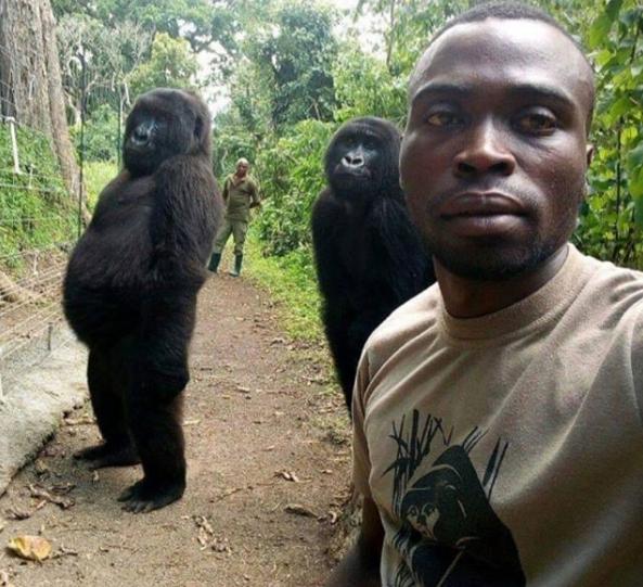 La historia de la selfie con dos gorilas en el Congo