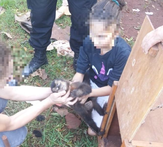 """Eldorado: rescataron a un """"monito"""" que vivía en cautiverio en una vivienda"""