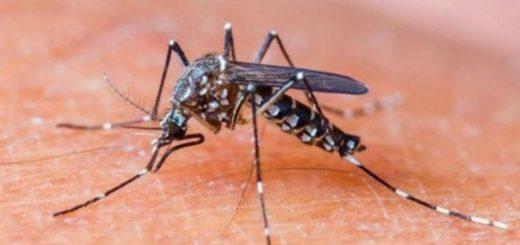 Ascienden a 3 las víctimas mortales del dengue desde enero en Paraguay