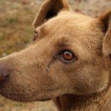 Invitan a una jornada de adopción de mascotas mañana en la Costanera de Posadas