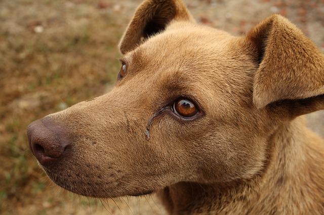Desde el IMuSA sostienen que no debe cortarse el tratamiento en perros aunque los análisis indiquen que ya no tienen Leishmaniasis