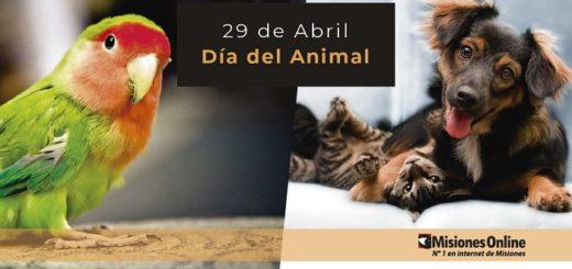 Día del Animal: hoy homenajeamos a quienes hacen posible que los animales sean felices y gocen de buena salud en Misiones