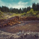 Puerto Iguazú: en el campo del Ejército talan árboles y montan aserradero ilegal