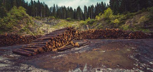 ¿Cuáles son países más deforestados de América Latina y porqué un país vecino encabeza la lista?