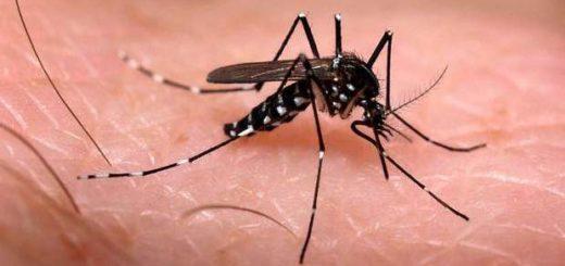 Día Mundial del Paludismo: ¿De qué forma se transmite esta enfermedad y cómo prevenirla?