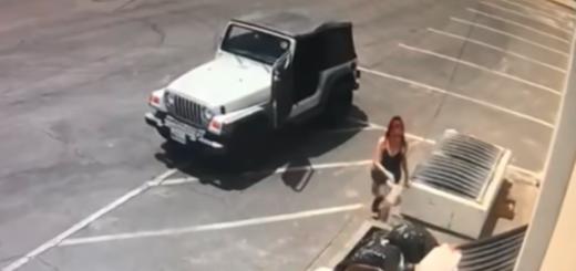 Indignante: una mujer tiró a un contenedor de basura a siete cachorros