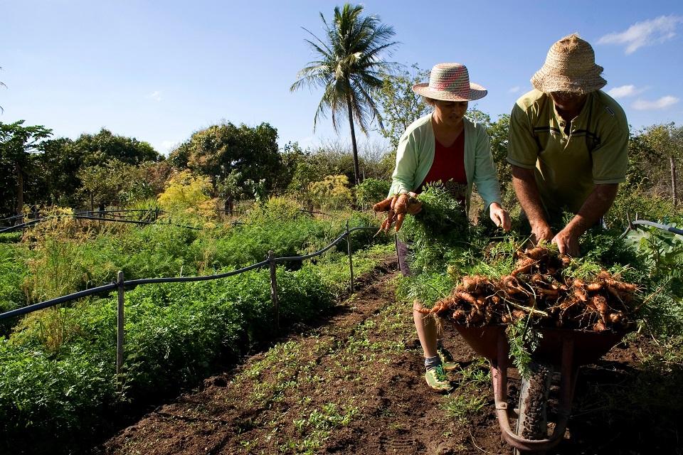 #SemanaSantaEnMisiones: productores coparán las plazas de Posadas, Oberá y Wanda este miércoles con gran variedad de productos de la chacra