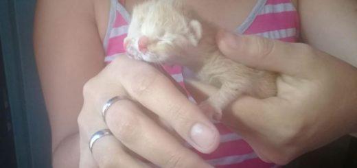 Eldorado: nació un gatito con dos caras