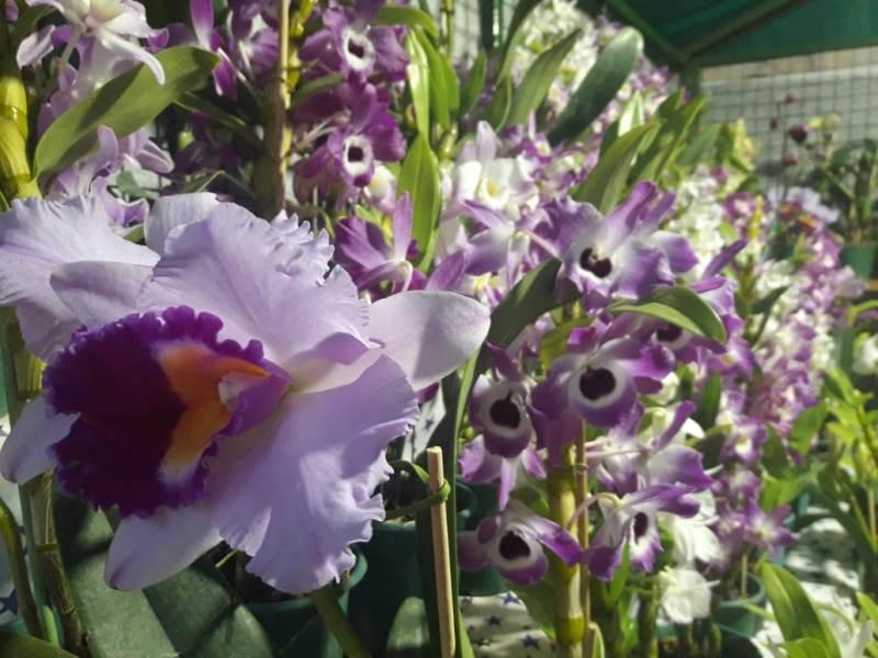 La Selva Misionera, donde habita la mitad de las especies de orquídeas del país: con tu voto puede ser una de las 7 Maravillas Naturales Argentinas
