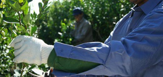 Realizarán una capacitación para cosecheros en Tres Capones