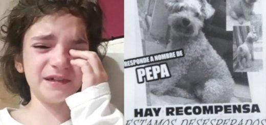 Video: una nena grabó un tierno mensaje para que la ayuden a encontrar a su perrita