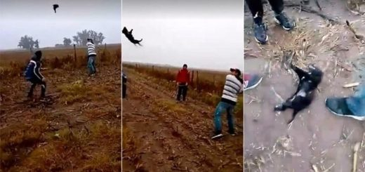 Crueldad absoluta: jugaron béisbol con un perro hasta matarlo