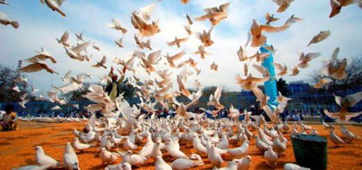 Convivir en paz, un proceso necesario para el desarrollo sostenible