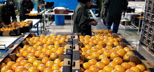 El Senado sancionó la emergencia económica en el sector citrícola