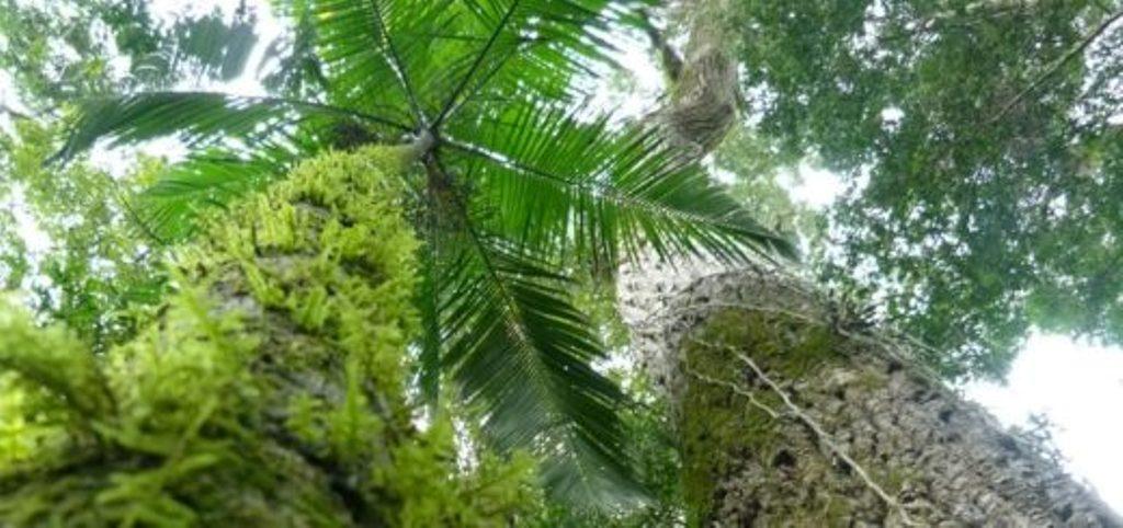 """Degiusti: """"La elección de la Selva Misionera como Maravilla Nacional implica un nuevo y gran desafío para Turismo de la Provincia"""""""