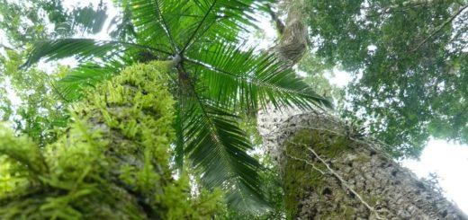 La crisis que pesa sobre la biodiversidad y los ecosistemas de la Tierra pone a la humanidad en riesgo