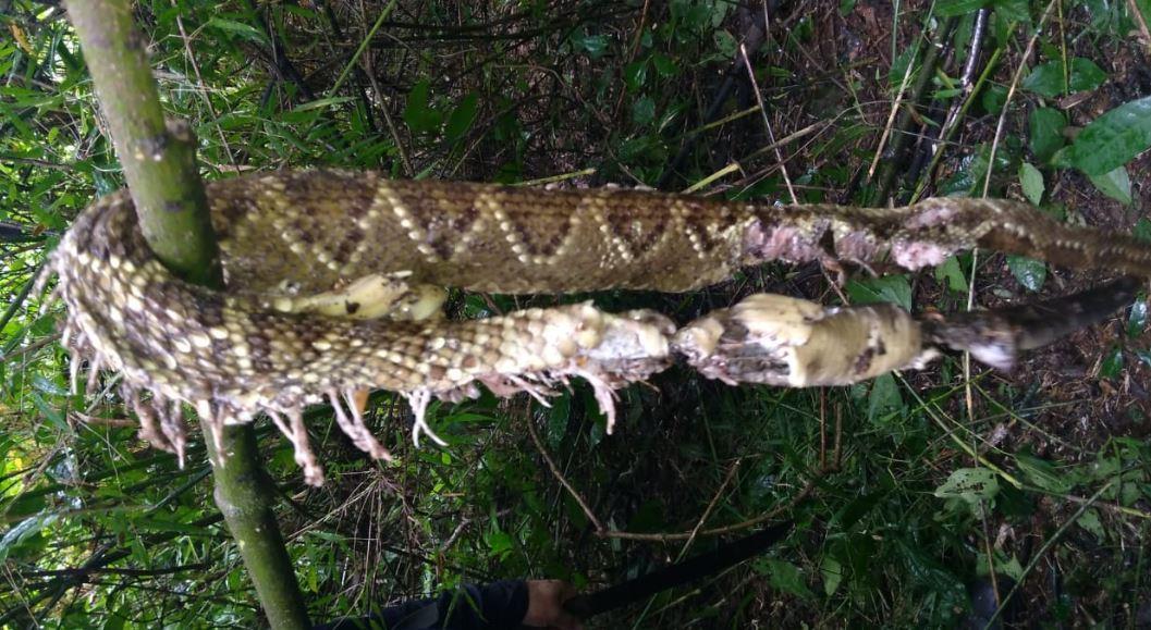 Aristóbulo del Valle: un joven murió tras ser mordido por una serpiente