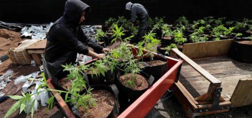 México: el Gobierno propone legalizar las drogas para reducir su consumo y combatir el narcotráfico
