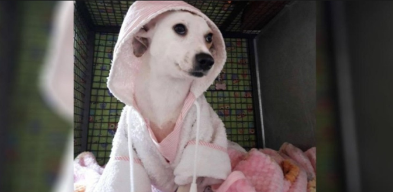 Rosita la perra que fue despellejada en Córdoba se recuperó y ahora espera ser adoptada