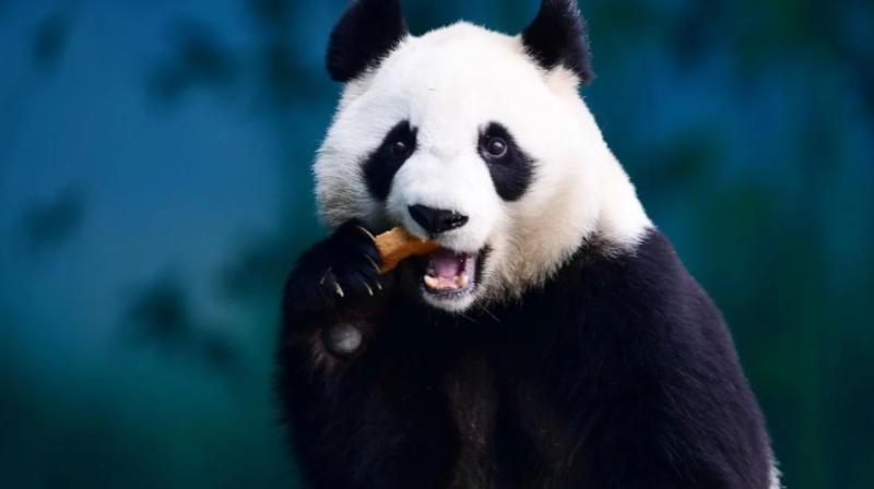 La ONU alerta que un millón de especies están en peligro de extinción
