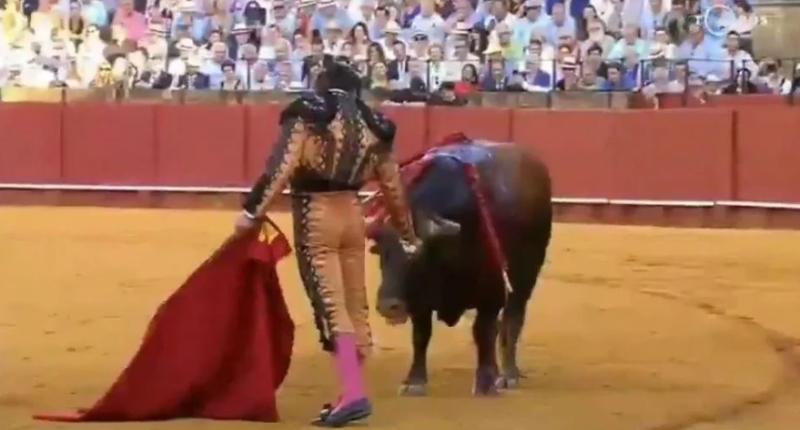 Cuestionada actitud de un torero: le limpió las lágrimas a un toro antes de matarlo