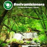 """""""La consagración de la Selva Misionera como Maravilla Natural Argentina va a traer enormes beneficios"""", aseguró Fabio Zapelli"""