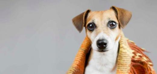 Cuidado animal: cómo proteger a tu perro durante el frío