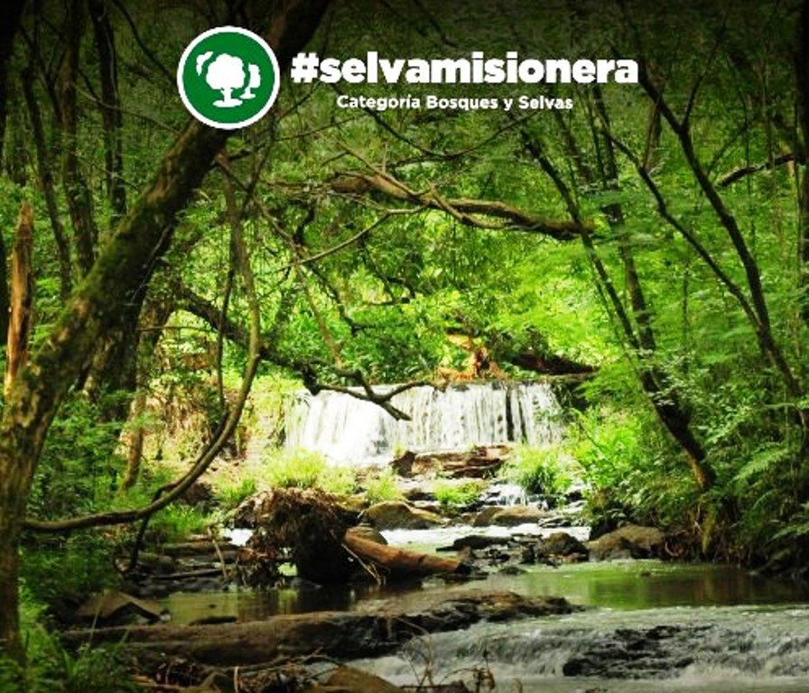 La Selva Misionera fue elegida como una de las 7 Maravillas Naturales de la Argentina