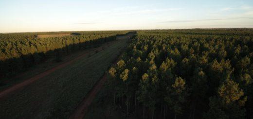 El gobierno de Corrientes presentará al sector foresto-industrial de la región el proyecto del futuro puerto de Lavalle
