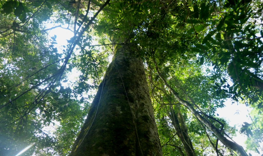 """Mesa Forestal Provincial: este jueves la agenda de trabajo incluirá el análisis de competitividad para la foresto-industria que """"tiene capacidad inmediata para movilizar la economía y crear empleo"""""""