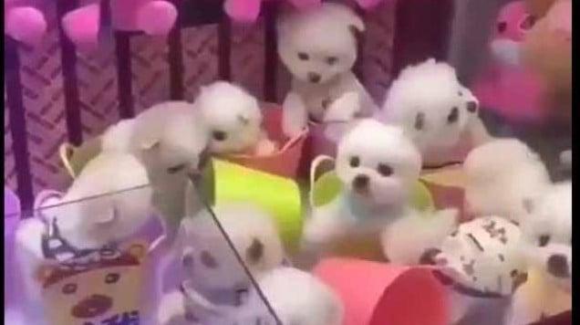 Indignación por una máquina de peluches que da cachorritos vivos
