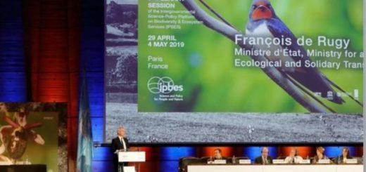 """""""La naturaleza ya está en parte perdida,  y el resto en declive"""", advierte informe de biodiversidad presentado en París por la científicos de la ONU"""