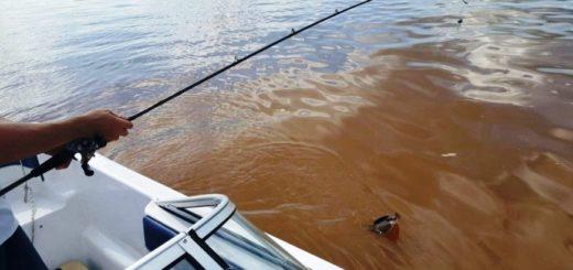 Destacan que cada vez más respetan las vedas de pesca, hasta el 31 de enero de 2020 rige para el río Uruguay