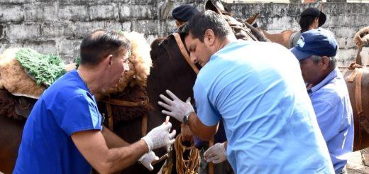 Tracción a sangre: más 30 recuperadores urbanos ya cuentan con el Carnet Sanitario Animal de sus caballos