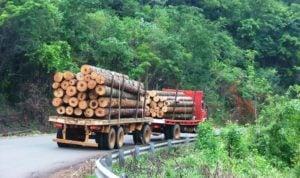 Coronavirus: para responder a la emergencia sanitaria, empresas forestales de España piden que el transporte de madera sea considerado una excepción