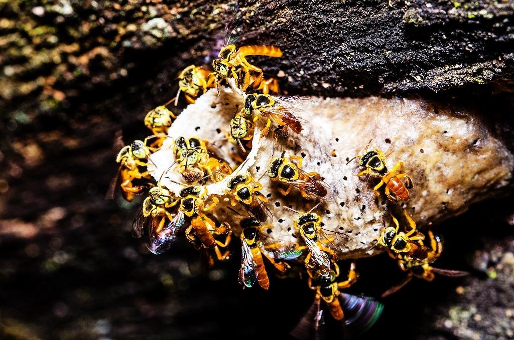 """La incorporación de la miel de yateí al Código Alimentario Nacional permitirá expandir el mercado y """"eventualmente exportar"""", afirmó Juan Manuel Díaz"""