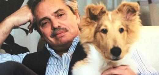 """Conocé a Dylan, el perro """"nacional y popular"""" del candidato a presidente, Alberto Fernández"""