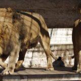 Maltrato animal en San Vicente: ató un perro a su moto y lo arrastró hasta matarlo
