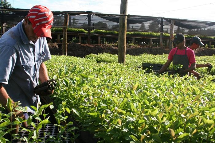 Desde el INTA brindaron consejos para prevenir daños en los cultivos durante el invierno