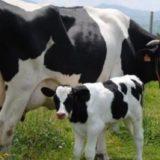 Un fuerte rayo cayó en un campo de La Pampa y mató a 22 vacas