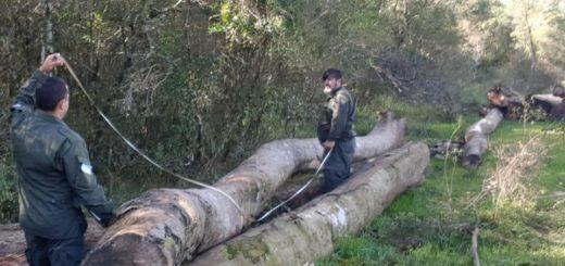 "A través de la línea ""Ecología Te Escucha"" se logró detectar apeo ilegal en Apóstoles"
