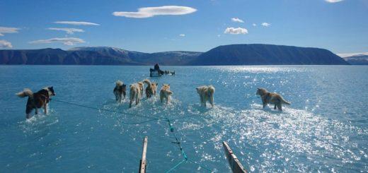 Groenlandia: la foto que se volvió viral y generó alerta sobre los hielos
