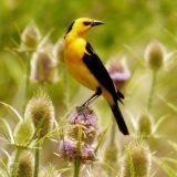 Preocupación de Aves Argentinas por el atropellamiento de fauna silvestre
