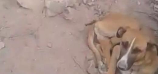 Encontraron en medio de la precordillera a un perro atado con alambre a una piedra