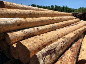 China importó 120 millones de metros cúbicos de madera en 2018 y tiene proyecciones de incrementar hasta 700 millones en el mediano plazo
