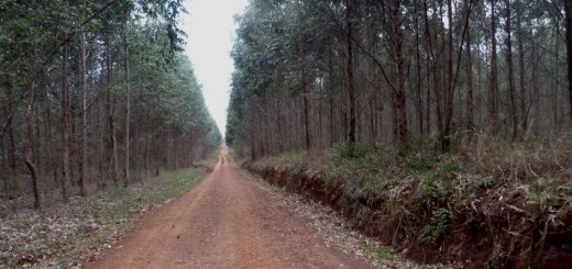 Misiones reclamará a Nación una deuda de 400 millones de pesos a forestadores