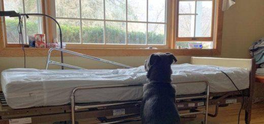 Viral: un perro espera a su dueño muerto frente a la cama que ocupaba en el hospital