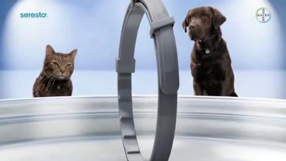 La Leishmaniasis prolifera en la región y el collar Seresto garantiza su prevención en perros y gatos