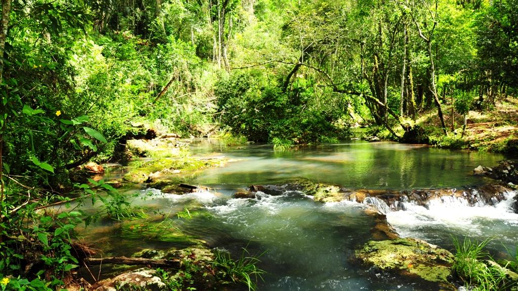 El 30% del territorio misionero está en conservación ambiental y se posiciona como una de las provincias más ecoamigables del país